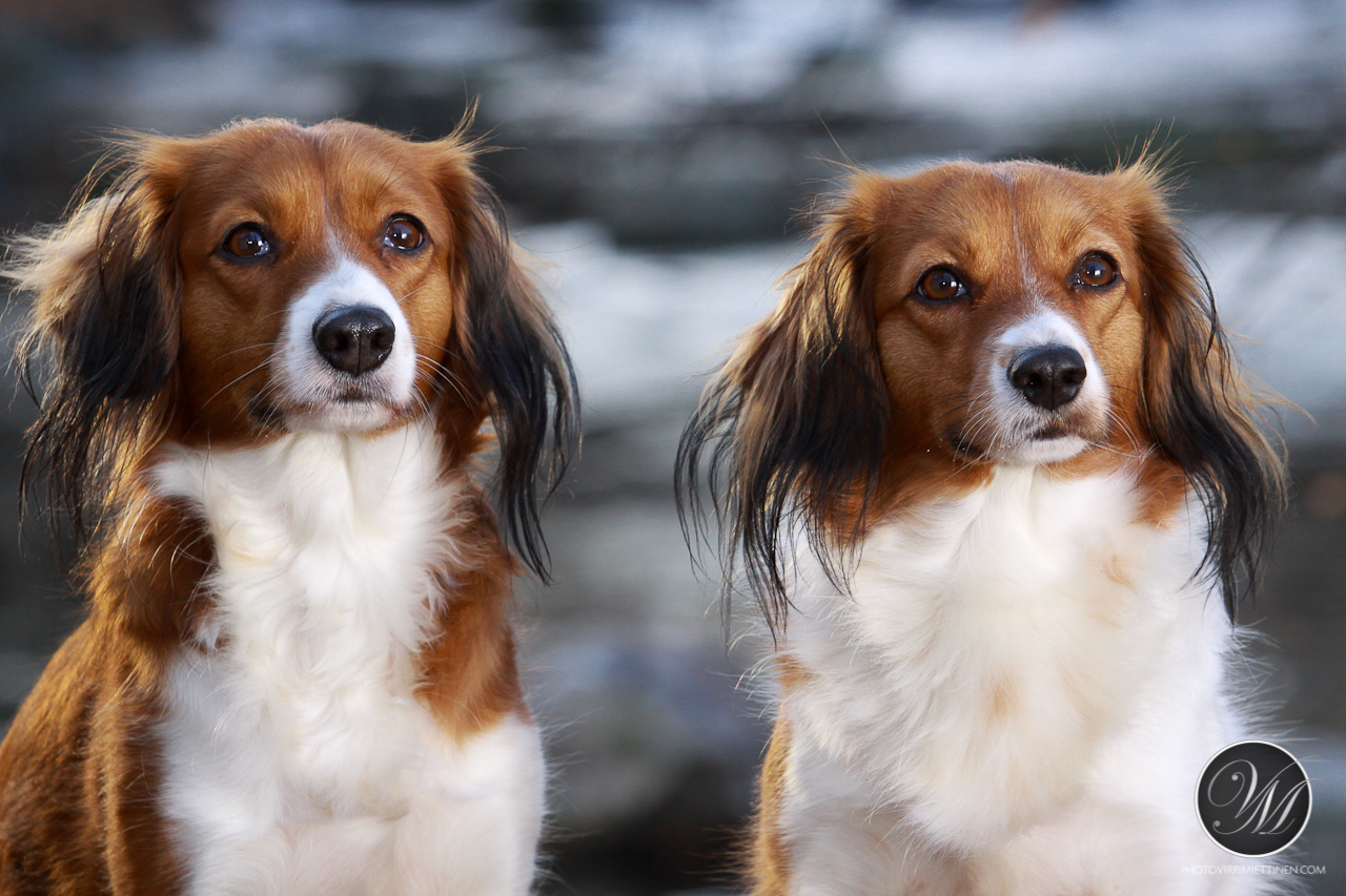 Dogs_11